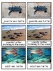 Life Cycle of a Sea Turtle Montessori 3-part cards