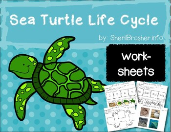 Life Cycle of a Sea Turtle | PreK-K Worksheets | English