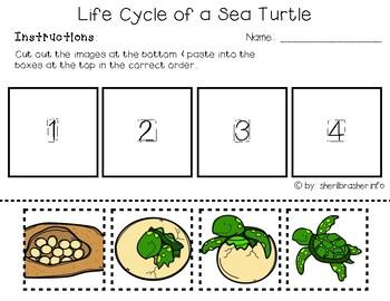 48 best sea turtles images on Pinterest | Turtles, Sea turtles and ...