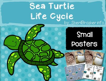 Life Cycle of a Sea Turtle | Sm Posters | English