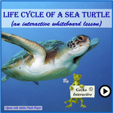 Life Cycle of a Sea Turtle - an interactive SmartBoard and Whiteboard lesson.