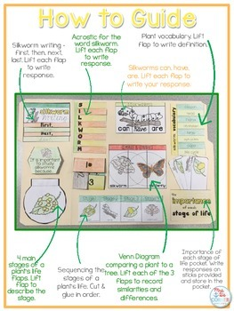 Life Cycle of a Silkworm Lapbook {with 12 foldables} Silkworm Life Cycle INB