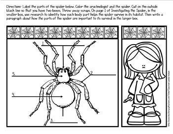 Life Cycle of a Spider Bundle