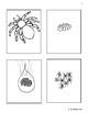 Bundle Life Cycle of a Spider Montessori, Waldorf, ReggioHomeschooling