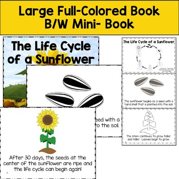 Life Cycle Sunflower with Full Colored book, mini book, writing, more