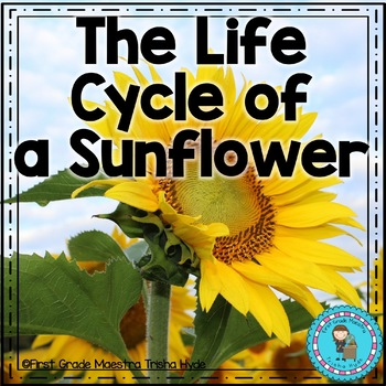 Life Cycle of a Sunflower with Full Color book, mini book, writing, more!