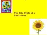 Life Cycle of a Sunflower Seed