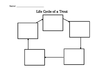 Life Cycle of a Trout (Fish)