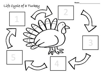 Life Cycle of a Turkey Anchor Chart and Worksheet
