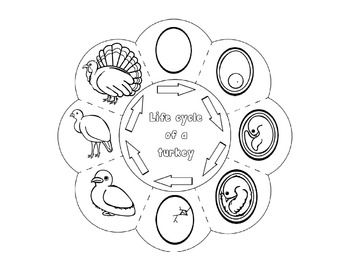 Life Cycle of a Turkey Craft - Interactive Science Crafts Series