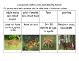 Life Cycle of a White-Tailed Deer Matching Computer Science Integrated Activity