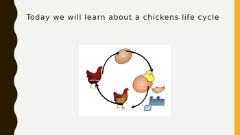 Life Cycle of a chicken Power point