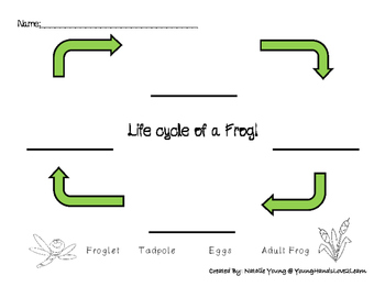 Life Cycle of a frog-Cut and Paste