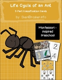 Life Cycle of an Ant | 3 Part Cards PreK | English
