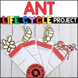 Life Cycle of an Ant: Fact Fan