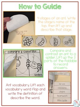 Life Cycle of an Ant Lapbook {with 12 foldables} Ant Life Cycle INB