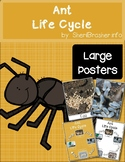 Life Cycle of an Ant | Large Posters | English