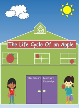 The Life Cycle of an Apple