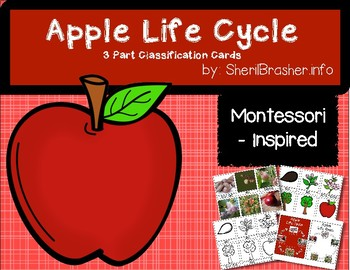 Life Cycle of an Apple | 3 Part Cards PreK | English