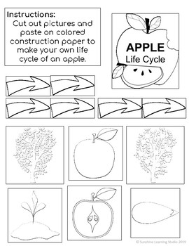 Life Cycle of an Apple