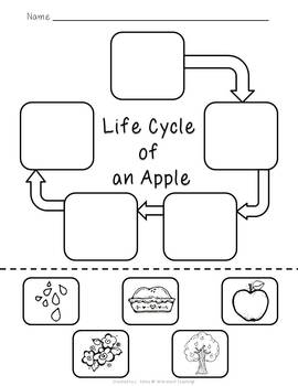 life cycle of an apple freebie by wild about teaching tpt. Black Bedroom Furniture Sets. Home Design Ideas
