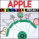 Life Cycle of an Apple: Fact Fan