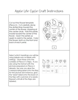 Life Cycle of an Apple Craft - Interactive Science Crafts Series