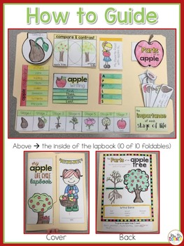 Life Cycle of an Apple Lapbook {with 10 foldables} Apple Tree Life Cycle INB