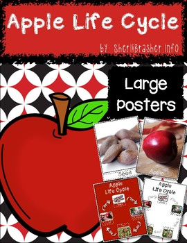 Life Cycle of an Apple | Lg Posters | English