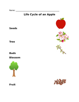 Life Cycle of an Apple - Matching
