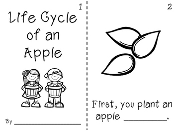 Life Cycle of an Apple Pack