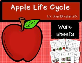 Life Cycle of an Apple | PreK-K Worksheets | English
