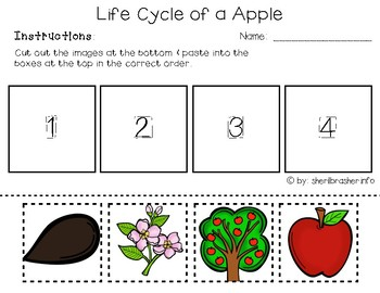 graphic about Apple Life Cycle Printable referred to as Existence Cycle of an Apple PreK-K Worksheets English