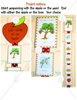 Life Cycle of an Apple Printable Cards and Activities