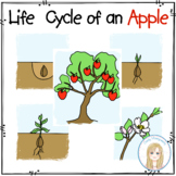 Life Cycle of an Apple Sequencing Cards and Activities