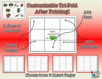 Life Cycle of an Apple Research Tri-Folds and Graphic Organizers