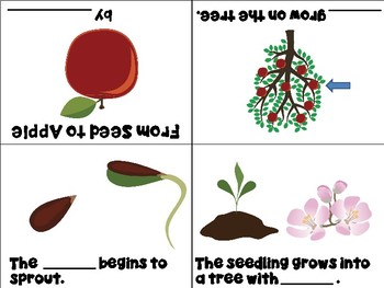 Life Cycle of an Apple Tree Mini Books - ESL/ENL, Special Needs, Young Learners