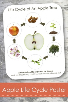 """Life Cycle of an Apple Tree; Montessori 8x10"""" Poster for Display"""