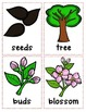Life Cycle of an Apple Tree Poster