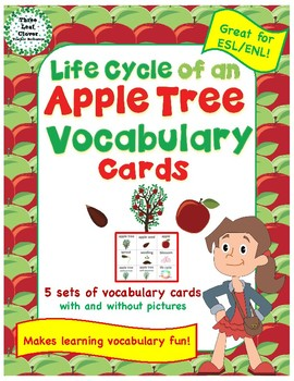Life Cycle of an Apple Tree Vocabulary Cards - Great for ESL/ENL