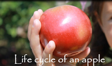 Life Cycle of an Apple Video