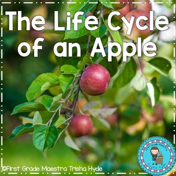 Life Cycle of an Apple with Colored book, mini book, writing, and more.