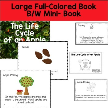 Apple Life Cycle  Reading, Writing, and Math