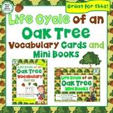 Life Cycle of an Oak Tree Vocabulary Cards and Mini Books BUNDLE