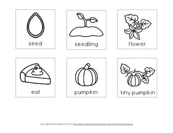 Life Cycle of an Pumpkin Sequencing Freebie