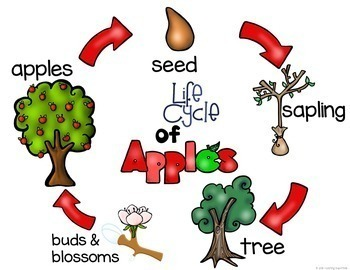 Life Cycle of an apple unit