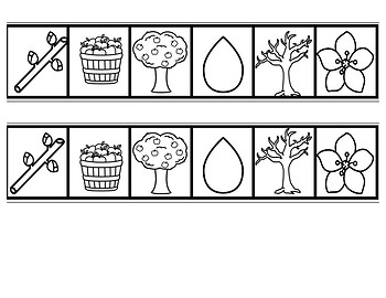Life Cycle of the Apple