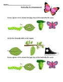 Life Cycle of the Butterfly Formative Assessment