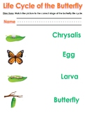 Life Cycle of the Butterfly Worksheet