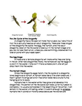 Life Cycle of the Dragon Fly